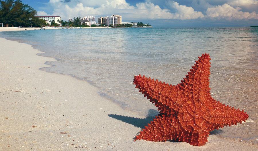 Caribbean Travel Marketplace to return to the Bahamas