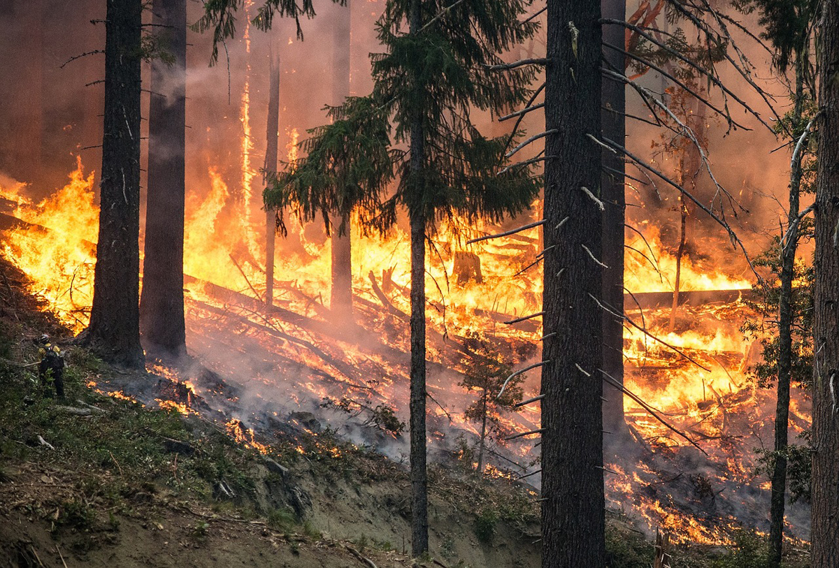 Air North offers discounted fare during BC wildfires