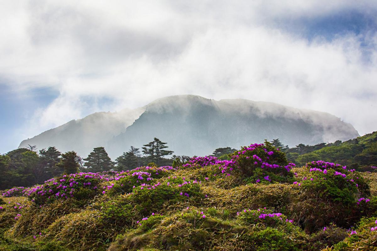 Four Seasons to open luxury resort on Korea's Jeju Island
