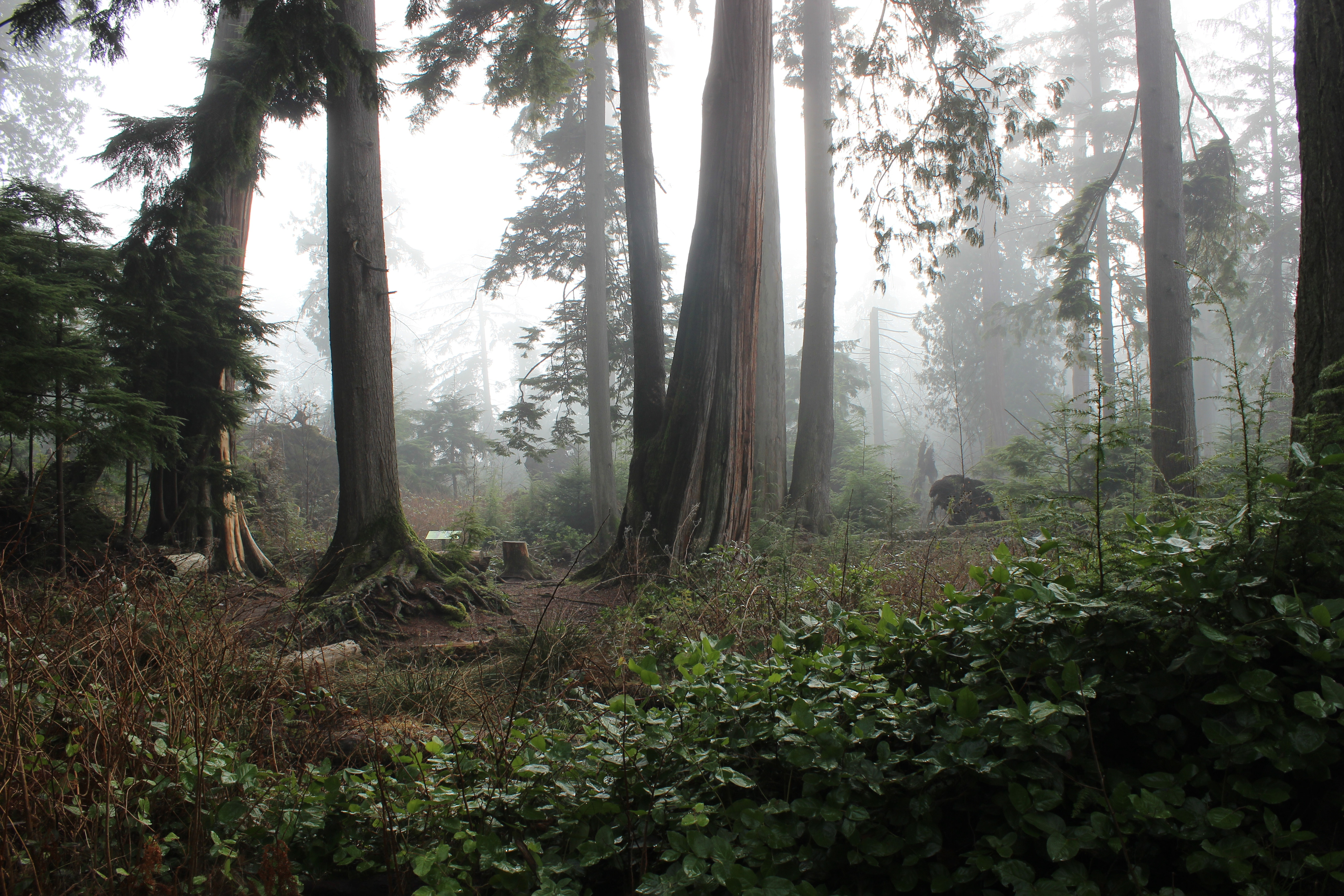 BC wildfires hurting tourism