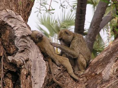 I need a day at the spa away from the kids :-P - Samburu National Park, Kenya