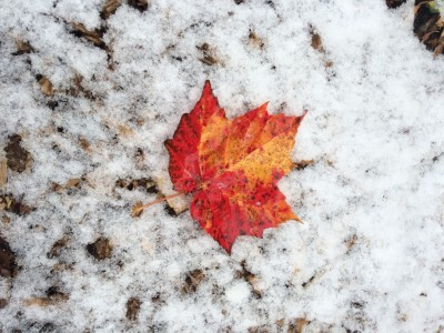 Early Fall in Canada