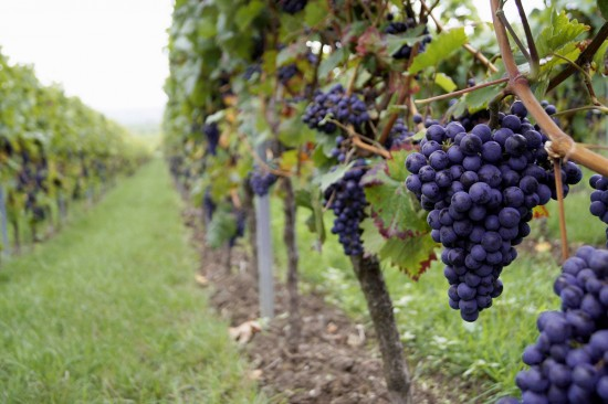 Wine, beer take centre stage in New Zealand tours