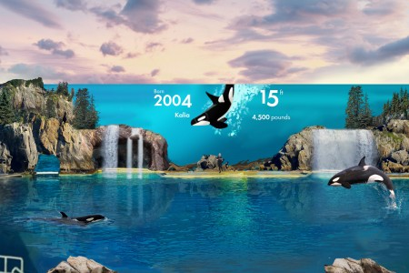 SeaWorld's Canadian pricing returns