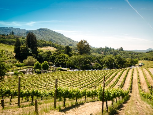 Sonoma County bounces back from wildfires
