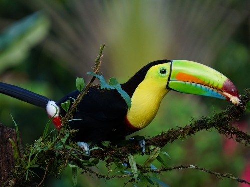 New hotels & attractions open in Costa Rica