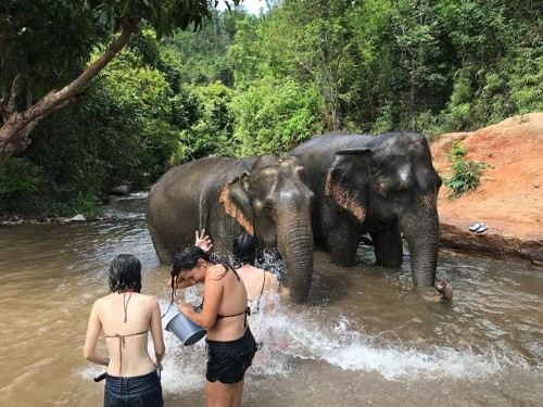 Thailand's Happy Elephant Care Valley ends human-elephant interactions