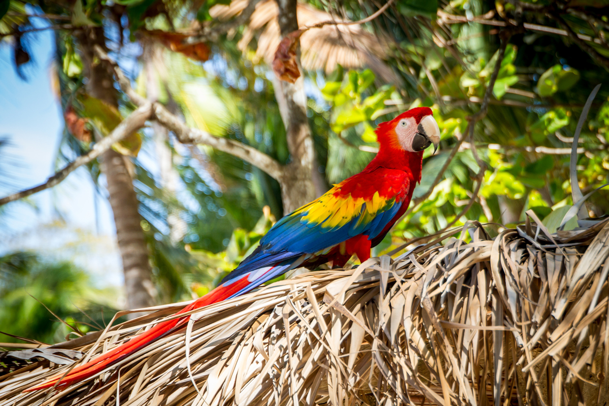 Costa Rica to focus on MICE, sustainable travel