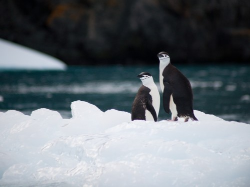 Hurtigruten offering free round-trip flights on some Antarctica cruises