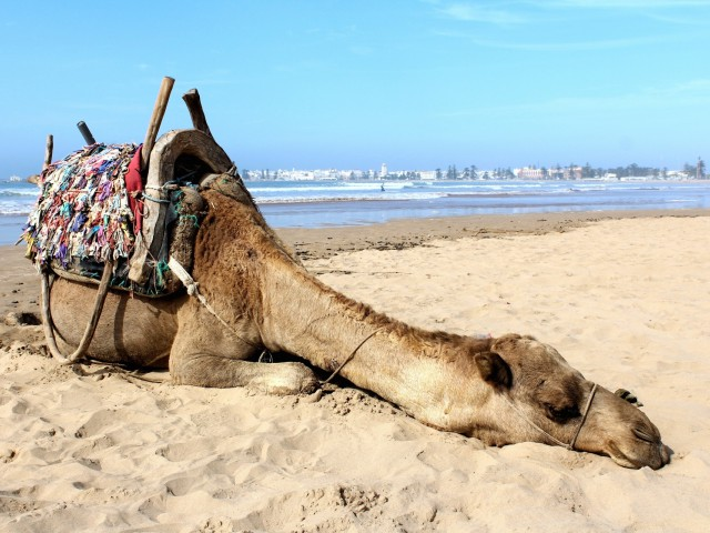 PAX Pic of the Day: Happy Hump Day from Morocco