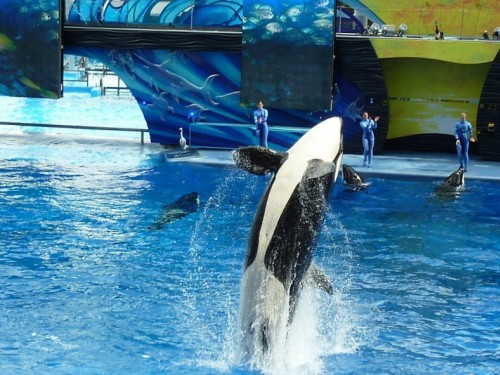 Air Canada & WestJet's relationship with SeaWorld tanks