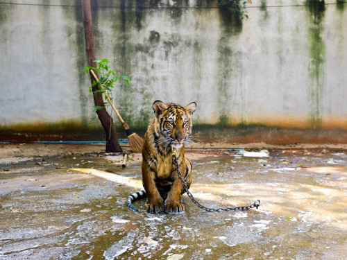 These 5 animal experiences hurt wildlife
