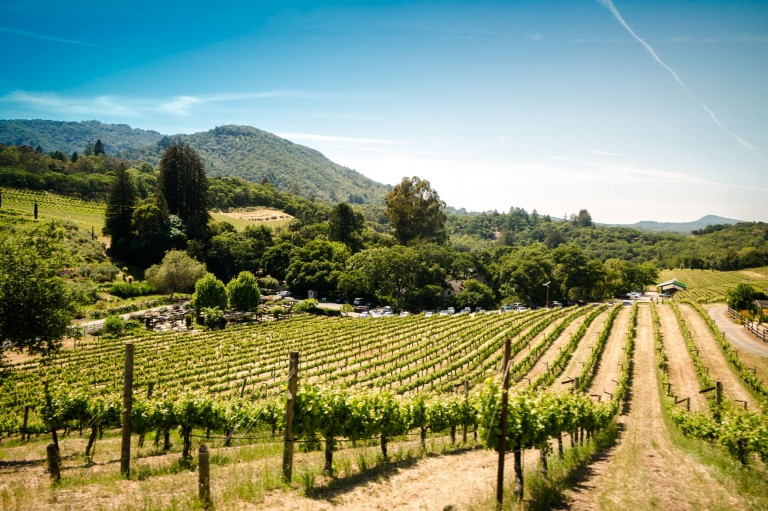 Sonoma County Tourism chooses Reach as Canadian agency of record