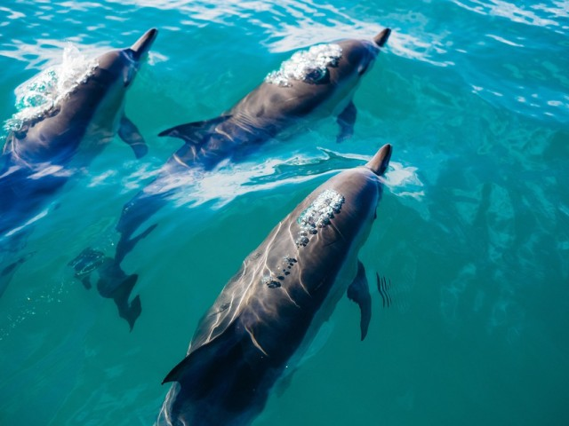 New Zealand ends dolphin swims
