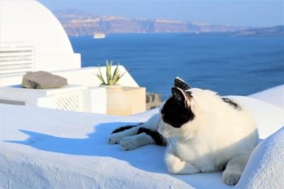 Lazy day in Santorini