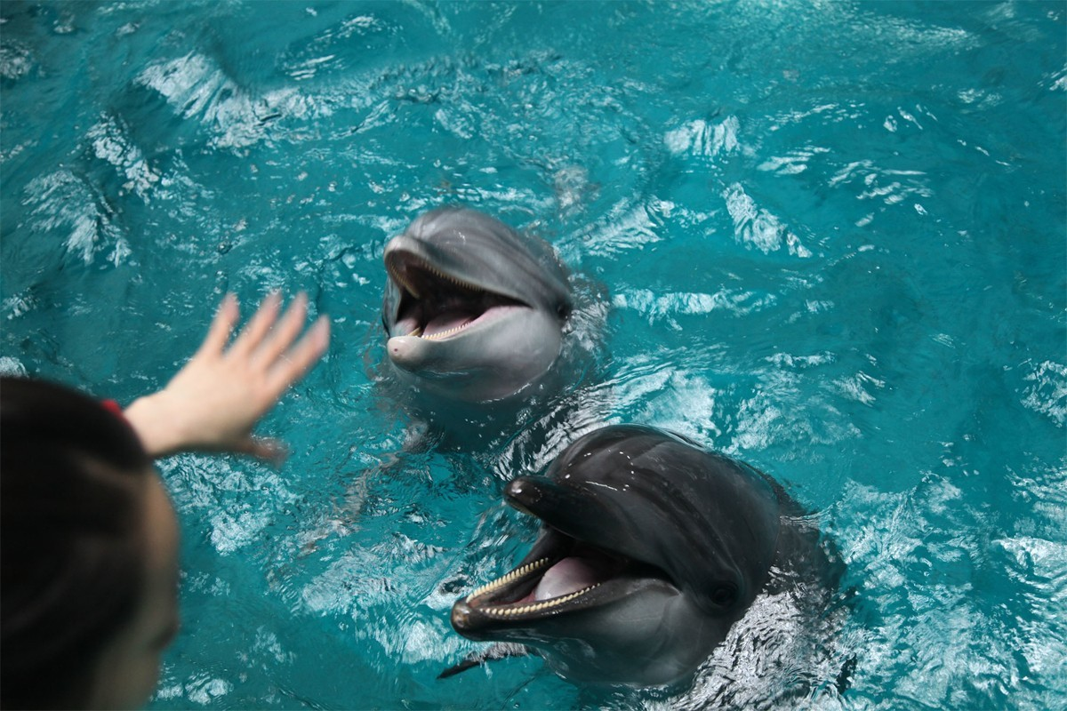 Air Canada & Transat pledge to eliminate dolphin tourism from packages