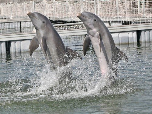 Sunwing & WestJet to drop dolphin experiences from vacation packages