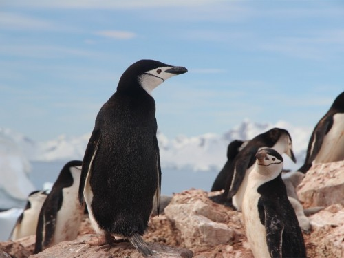Adventure Canada launching 3 new Antarctica expeditions for 2021