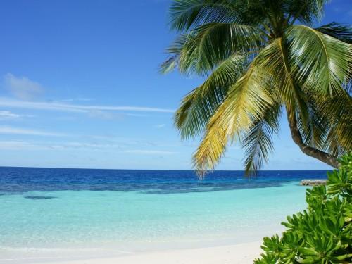 COVID-19: ACV, Sunwing & Transat offer flexible travel options