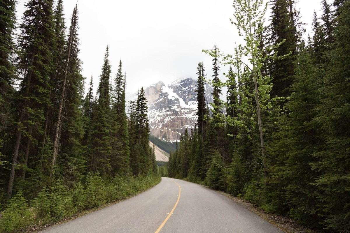 Most British Columbians are planning a road trip this summer, survey says